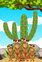 Meerkats standing by the cactus plant vector