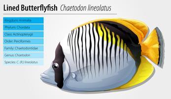 Gezeichneter Falterfisch