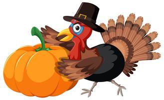 Turkey collect pumpkin on white background