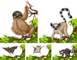 Animales salvajes en la rama