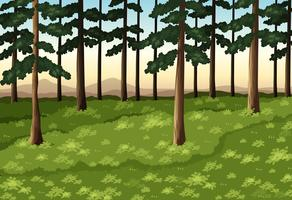 Background scene with trees in forest