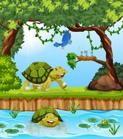 Turtle in the jungle