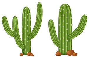 Two cactus plants on white background