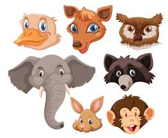 Set of wild animals head