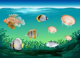 Many fish swimming under the ocean