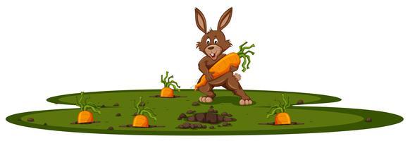 Conejito y jardín de zanahoria.