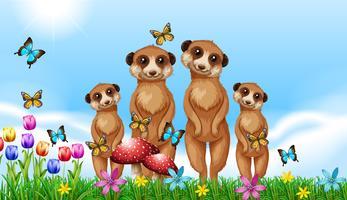 Fyra meerkats i trädgården