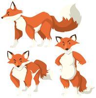 Tres acciones diferentes de zorro rojo.