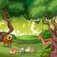 Vilt djur i skogen