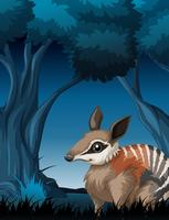 Een bandicoot in donker bos