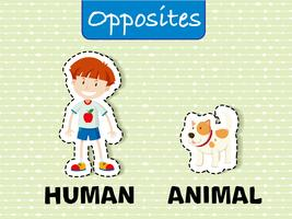 Opposite word education flashcard illustration