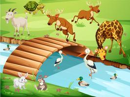 Djurliv i en vacker natur
