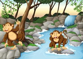 Two monkeys living by the waterfall