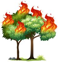 Isolared fire on tree