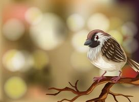 A sparrow on blurry background