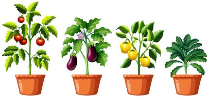 Set of different plants vector