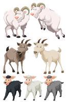 Set van geiten en schapen