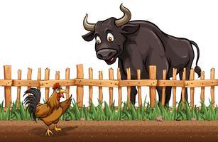 Búfalo e frango na fazenda