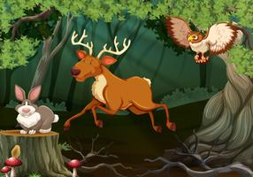 Forest scene with wild animals