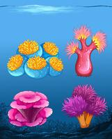 Set of different coral reef vector