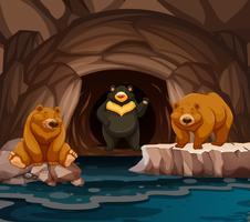 Osos viviendo en la cueva