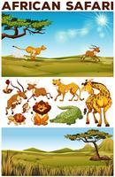 Tema de safari con animales salvajes en el campo.