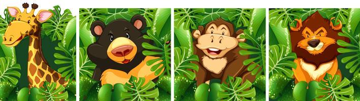 Vilda djur bakom busken