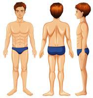 Eine Reihe von männlichen Körper