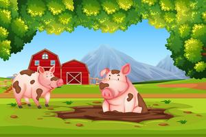 Pig in nature farm