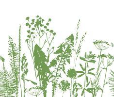 Padrão sem emenda à base de plantas. Fronteira botânica. Fundo de grama vector.