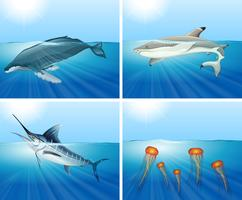 Shark and other sea animals in the sea