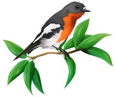 Un uccello selvatico su sfondo bianco