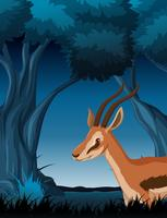 A gazelle in dark forest