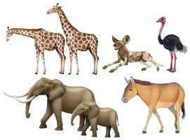 Cinco tipos de animales salvajes.