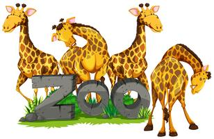 Four giraffes in the zoo vector