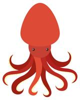Red octopus on white background