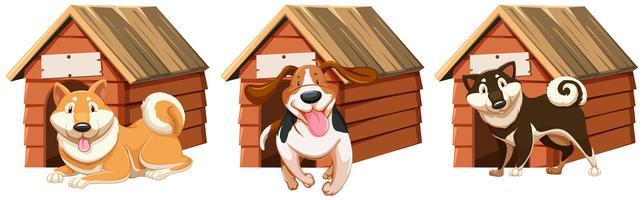 Hunde im Holzhaus
