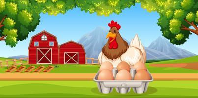 Frango com cena de fazenda de ovos