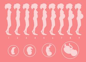 A Vector of Pregnant Progression