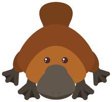 Platypus sobre fondo blanco vector