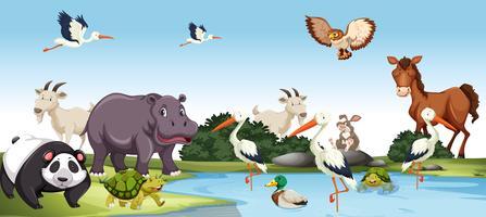 Verschiedene wilde Tiere Szene