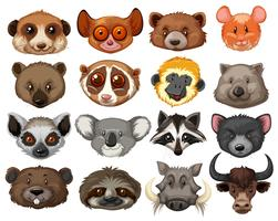 Set of animal heads