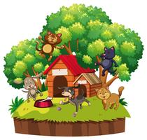 Hunde und Katzen im Pethouse