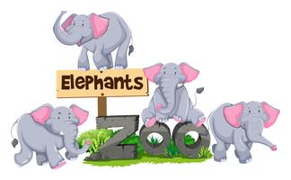 Elephants around the zoo sign