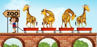 Liten tjej som drar vagnar med giraff till djurparken