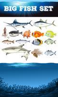 Animais marinhos e cena do oceano