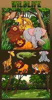 Vida selvagem que vive na floresta