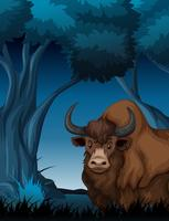 Yak in the dark forest