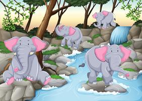 Fyra elefanter vid vattenfallet