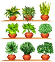 Different kinds of plants in clay pots
